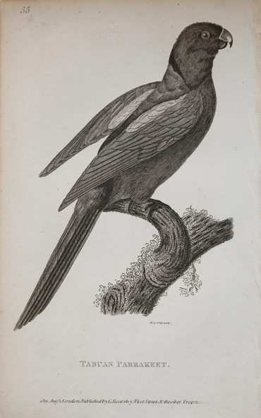 detail of parrot
