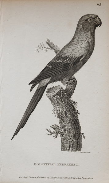 ornithological antique paper prings